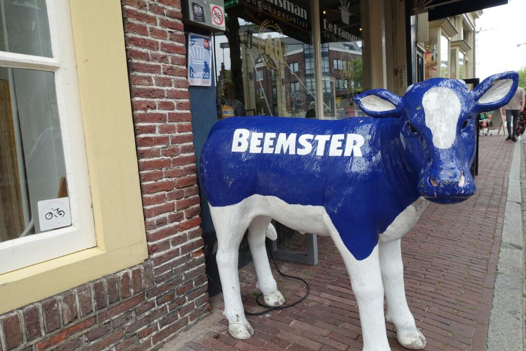 Beemster koe